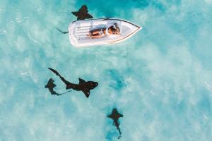 Im Boot umringt von Haien. (Foto: Jared Rice, Unsplash.com)