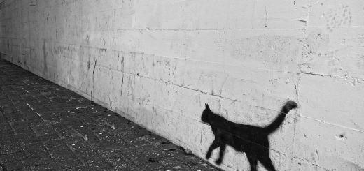 Graffiti. Katze an einer Hauswand. (Foto: Mabel Amber, Pixabay.com, Creative Commons CC0)