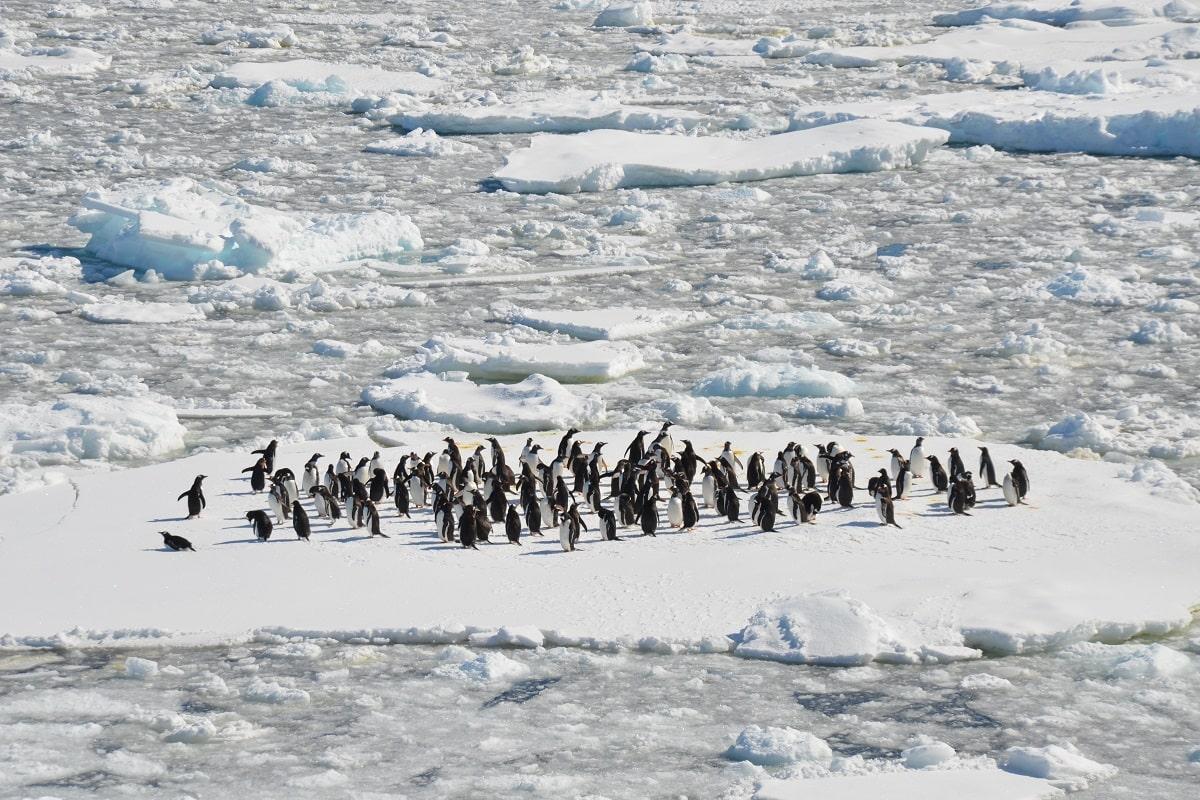 Das ewige Eis ist der Lebensraum von zahlreichen Tierarten wie Pinguine. (Foto: Danielle Barnes, Unsplash.com)