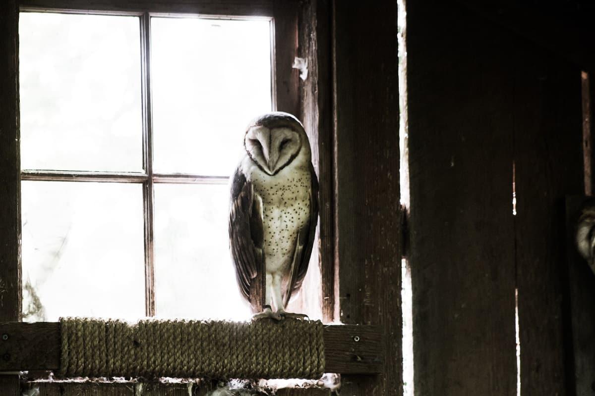 Tiere bemerken jede Veränderung des Lebensraums. (Foto: Cliff Johnson, Unsplash.com)