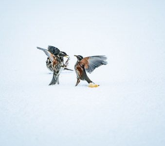 Der Rat an die Vögel wäre, den Streit ums Futter einzustellen. (Foto: Jonatan Pie, Unsplash.com)