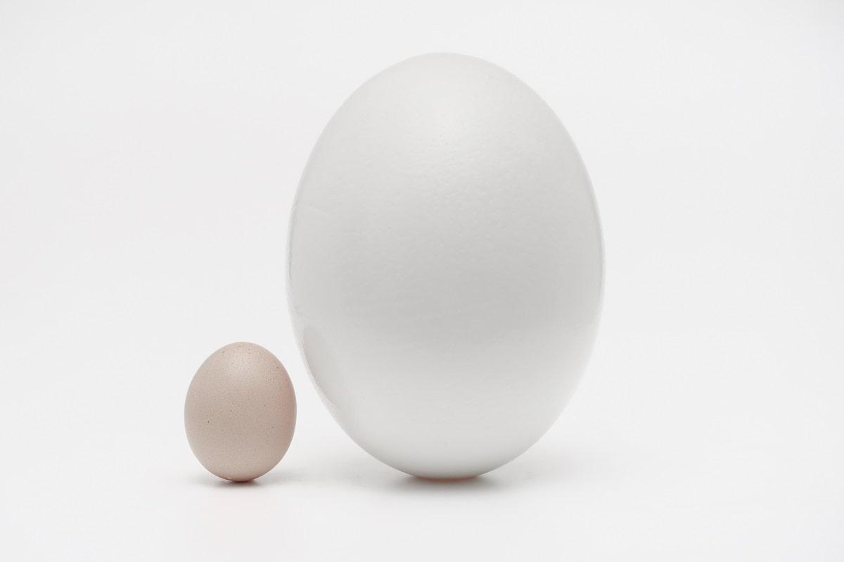 Krieg oder Frieden? Ei bleibt Ei, egal wie groß. (Foto: Daniele Levis Pelusi, Unsplash.com)