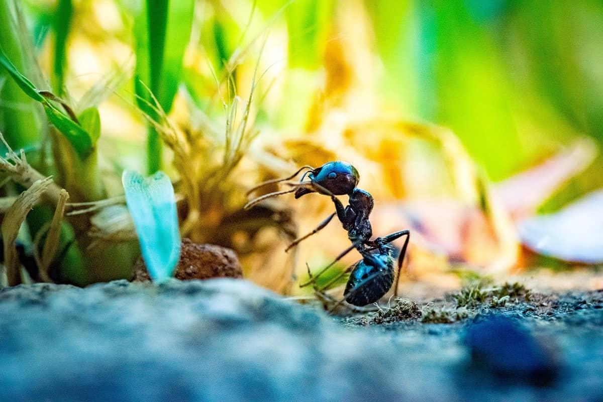 Bereitet sich die Ameise auf einen Raubzug vor? (Foto: Guillaume de Germain, Unsplash.com)