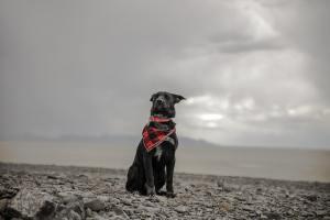 Hundstage sind ein Symbol für die Gegenwart. (Foto: Patrick Hendry, Unsplash.com)