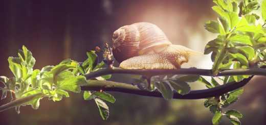 Eine Schnecke als Symbol der Real-Utopie. (Foto: Smim Bipi, Pixabay.com)