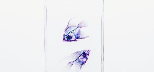 Zwei Fische als Symbol für Zukunft und Vergangenheit, für Aufstieg und Abstieg. (Foto: Maria Teneva, Unsplash.com)