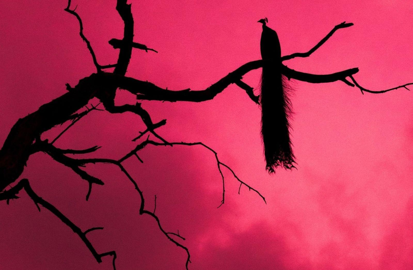 Ein Vogel irgendwo in den USA aufgenommen. (Foto: Kan Tri, Unsplash.com)