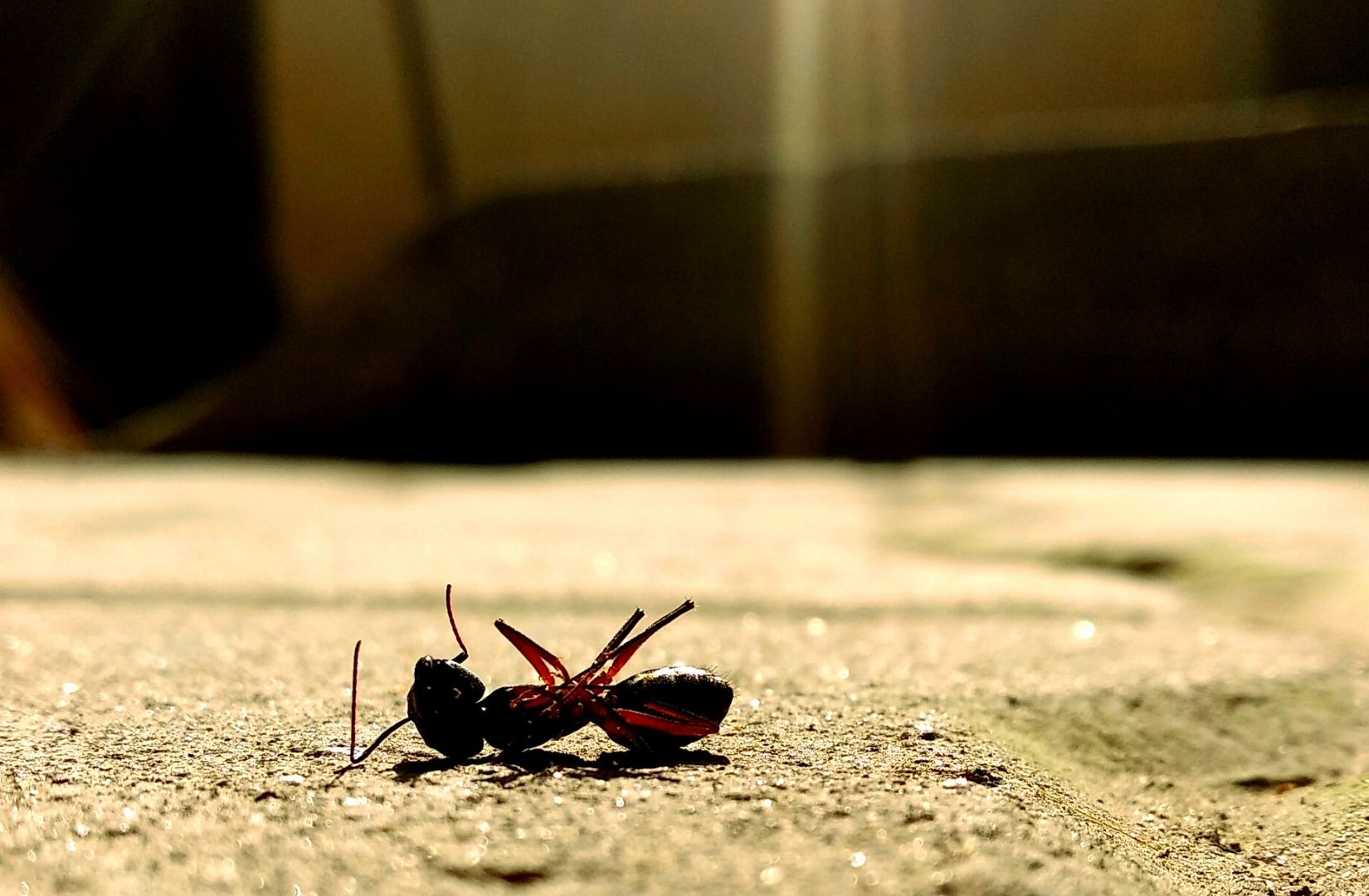 Eine tote Ameise als Symbol für überzogenen Subjektivismus. (Foto: Malcolm Shadrach, Unsplash.com)
