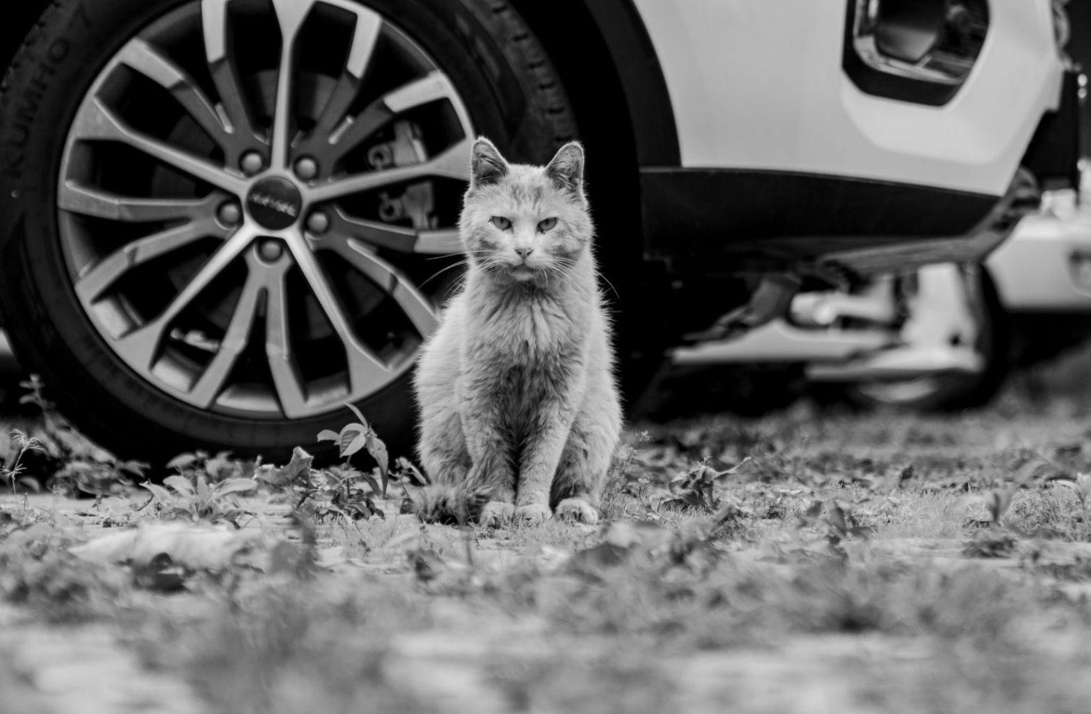 Mögen Katzen Popkultur? Sie findet auf The Deframing Channel wo auch Dirk C. Fleck gelesen hat. (Foto: Li Lin, Unsplash.com)