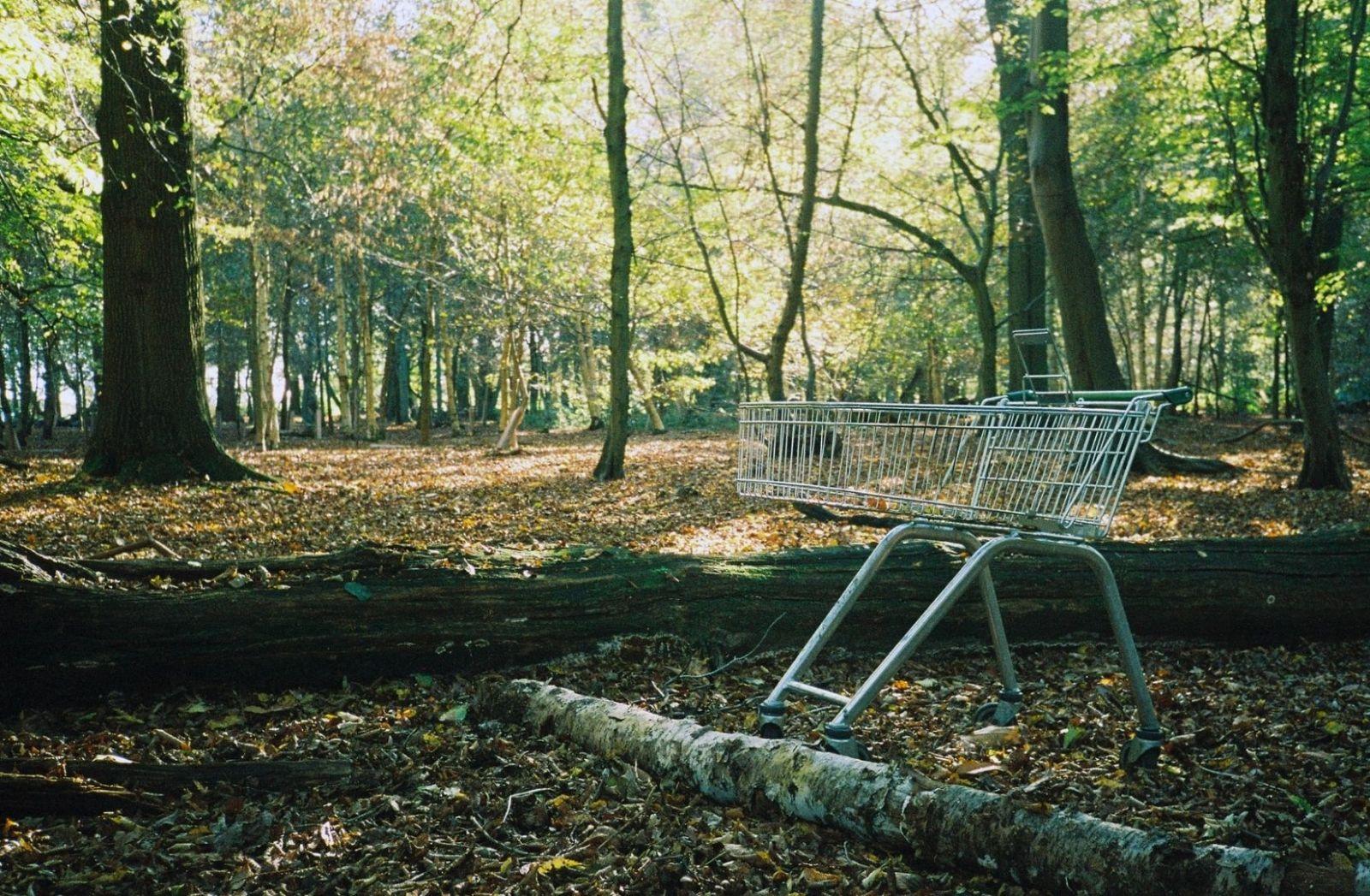 Ein Einkaufswagen mitten in einem friedlichen Wald. Lauert hinter dem Baum ein kleiner Nazi? (Foto: Nick Page, Unsplash.com)