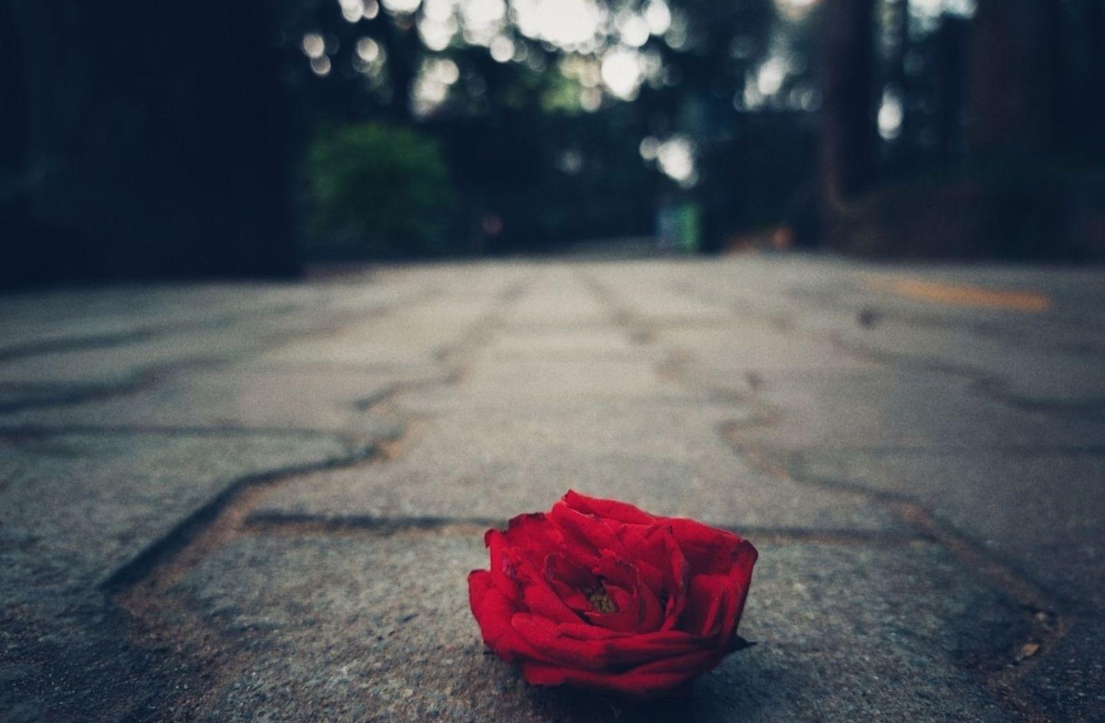 Haltung ist eine Form der Erkenntnis von Schönheit. (Foto: Shashwat Agarwal, Unsplash.com)