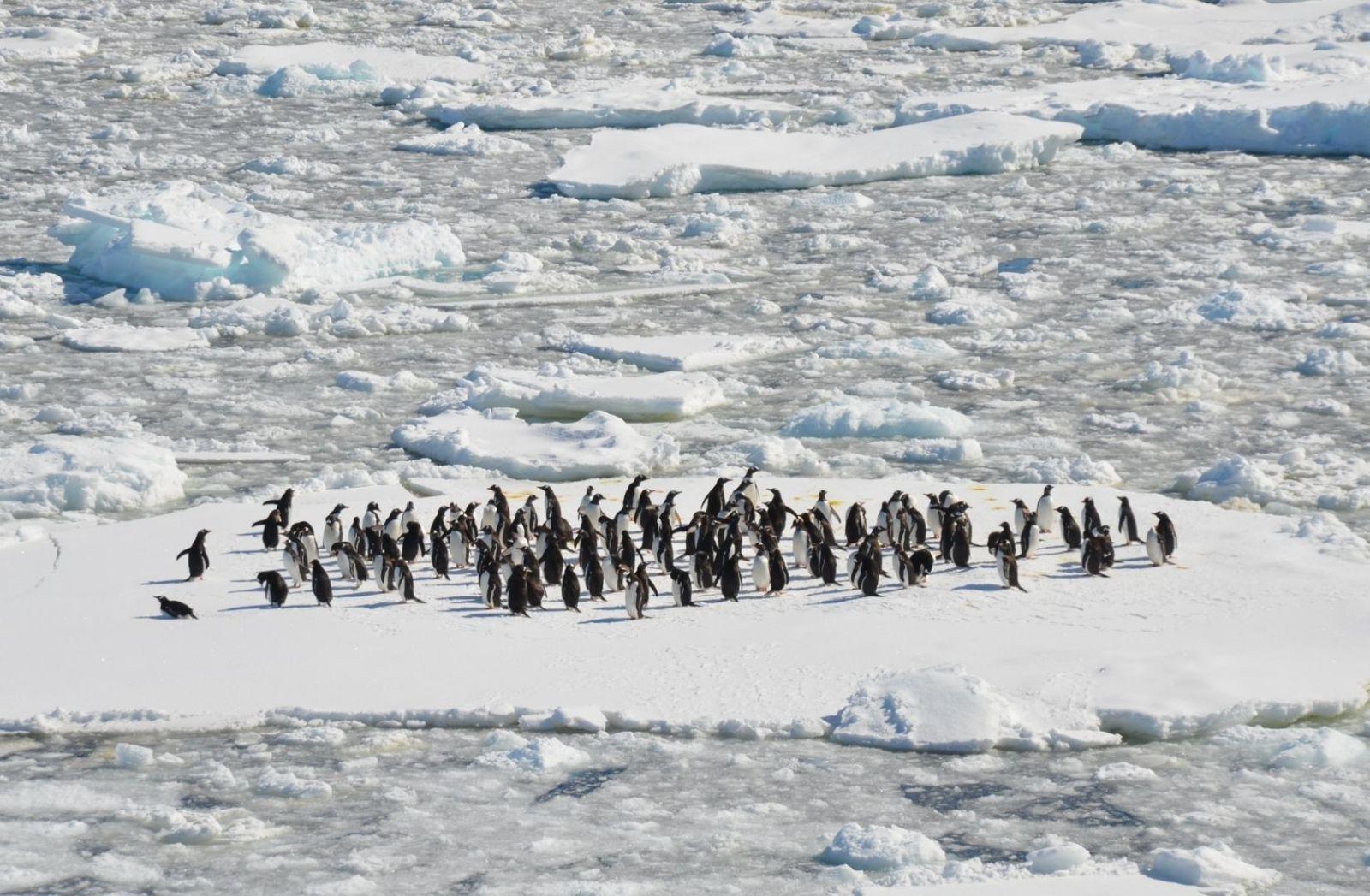 Das Wesentliche ist auch für Pinguine, zu erkennen, wenn die Eisscholle bricht. (Foto: Danielle Barnes, Unsplash.com)