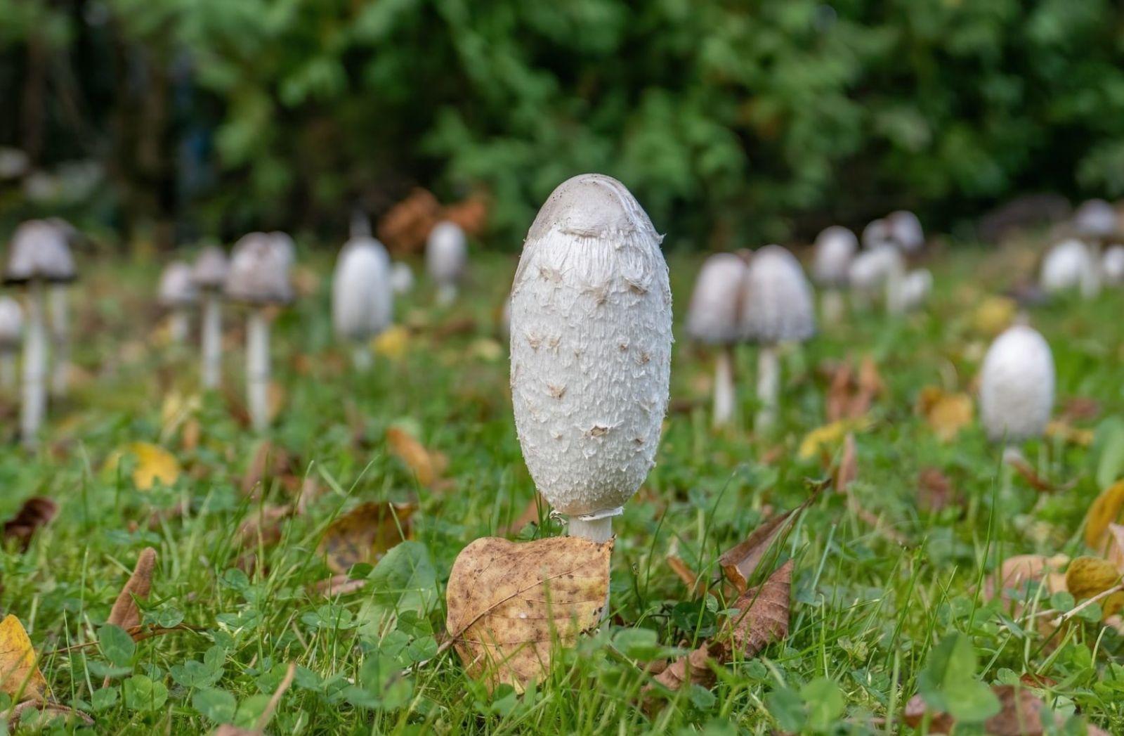Pilze im Wald. (Foto: Sangga Rima Roman Selia, Unsplash.com)