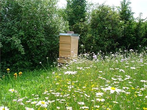 Der Bienenstand im Gründungsjahr der Imkerei. Inzwischen ist das Volk nicht mehr allein.