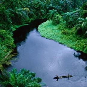 Kongo Regenwald