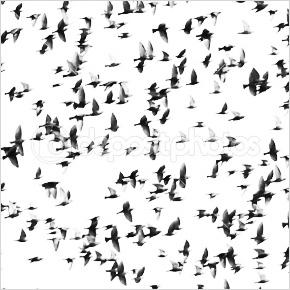 Vogelschwarm © Dusan Petrovic