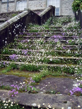 photo von Celadonsusan  flickr.com  Hi-res  1,785 notes