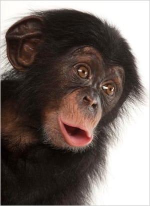 Foto von Joel Sartore, National Geographic Photo Ark.