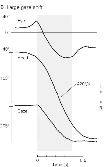 The Control Of Gaze