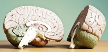Tinc un cervell esquerrà o dretà?