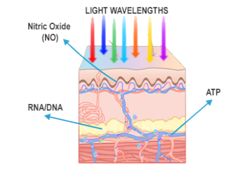 light therapy benefits neurocare pro clearwater florida