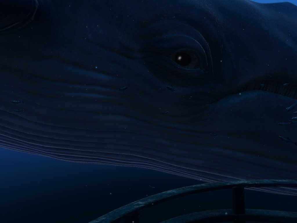 The eye of a large whale