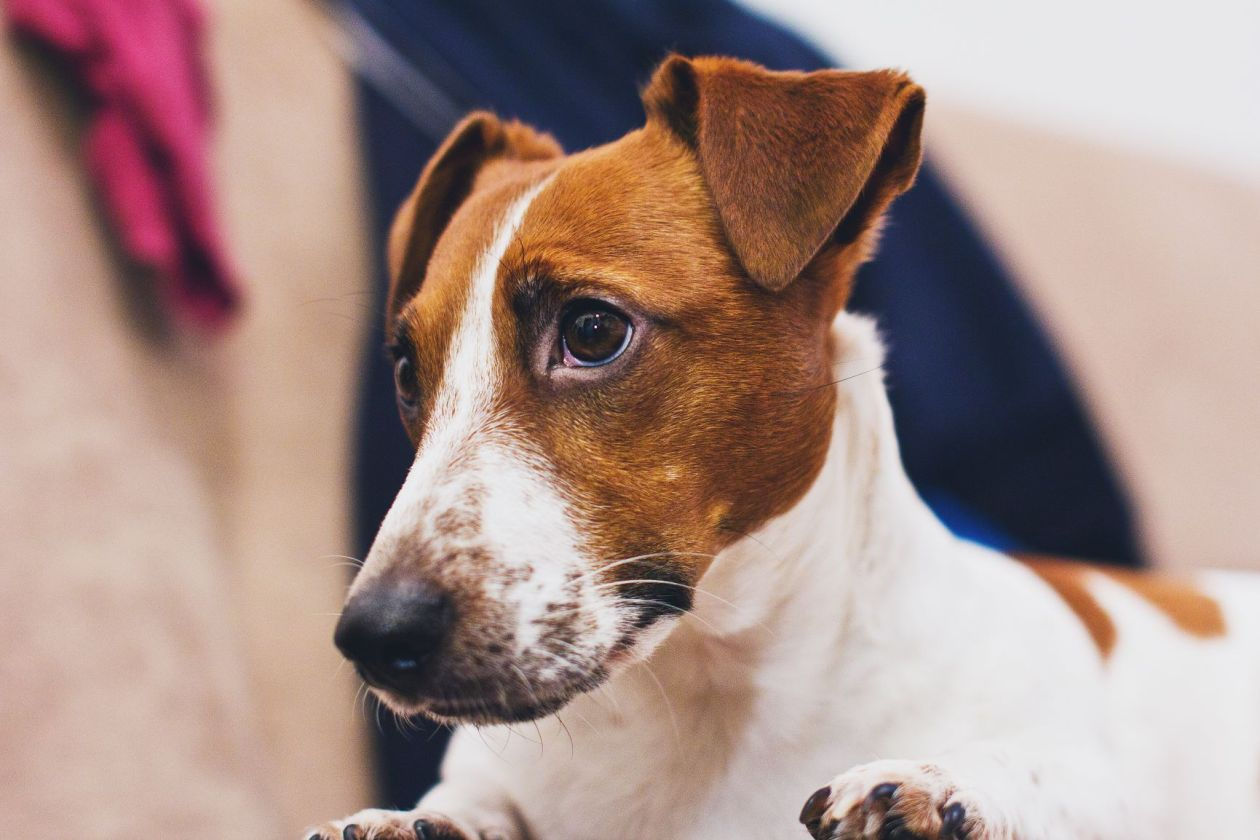 Canva - Still Life Photo of White and Brown Dog.jpg
