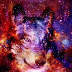 The Autistic Wolf - Profile picture