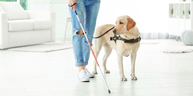 a femme presenting person with a Blind cane and seeing eye support dog stands in the middle of a room. The image is attached to an article about being blind and autistic on NeuroClastic, a nonprofit that highlights autistic perspectives on autism