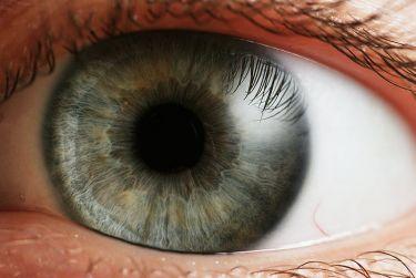 Eye_iris wikipeia el cerebro no puede procesar toda la información que aporta el ojo
