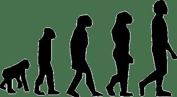 evolution-297234_640