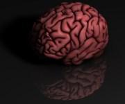 Brain Talk Show Skit [video] – Amygdala & Ventromedial Prefrontal Cortex