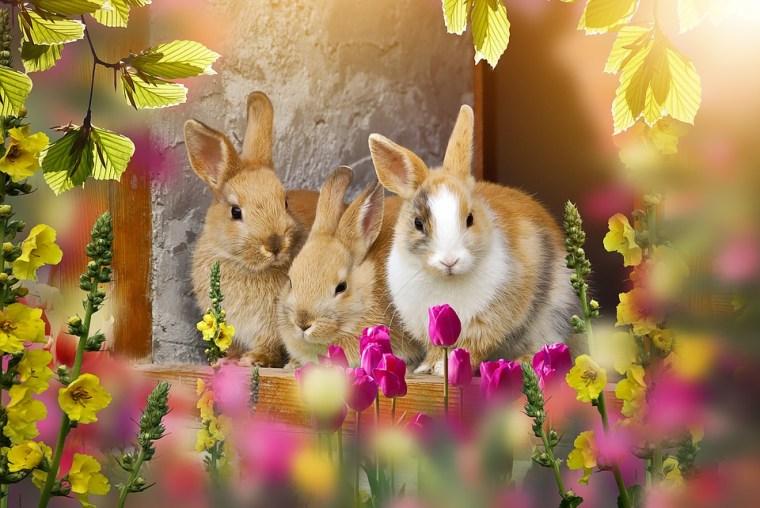 rabbit-4067874_960_720