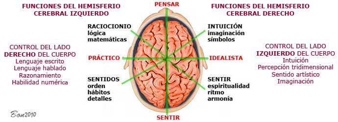 isual thinking hemisferios cerebrales