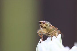 UK and US neuroscientists to create insect brain simulation