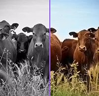 Learning to color: Can artificial intelligence accurately colorize your black and white photos?