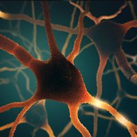 Understanding Neuroscience and the Law