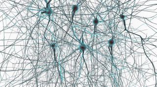 Can an uploaded brain live forever?