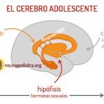La adolescencia del cerebro