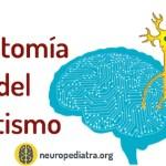 El cerebro del autismo