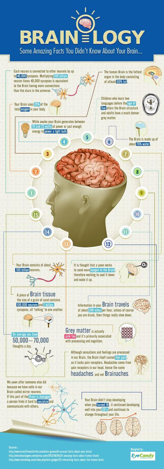 15 evidencias cientificas cerebro