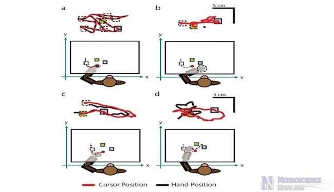 monkey-robotic-arm
