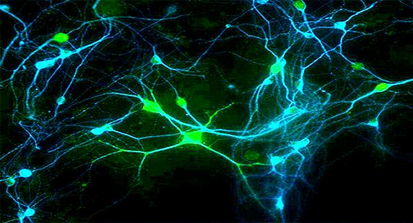 neuroscience-news-relaunch