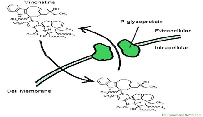 p-glycoprotein-transport-public