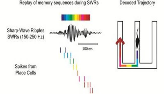 replay-memory-learning