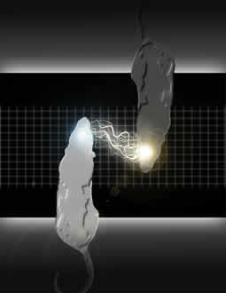 A graphic of two rats with white lights sparking between their heads is shown to depict the BTBI activity.