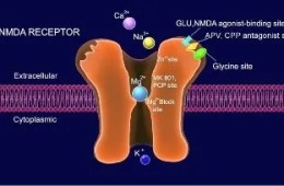 The image shows an NDMA receptor in action.