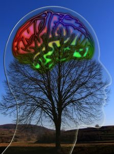 The image shows a brain attached to a tree in day time.