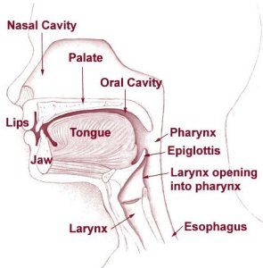 The diagram shows head and neck regions associated with cancer.