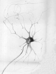 This is a diagram of an axon.